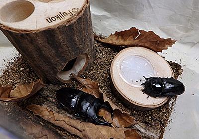 オオクワガタの成虫用飼育セットを組んでみよう。 | オオクワガタを飼おう!
