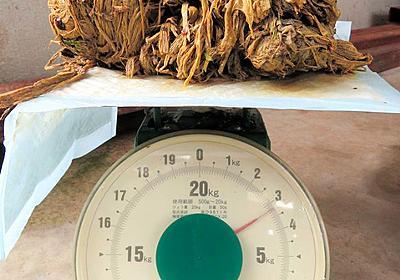 シカの胃から3キロの「塊」 捨てられたポリ袋か 奈良:朝日新聞デジタル