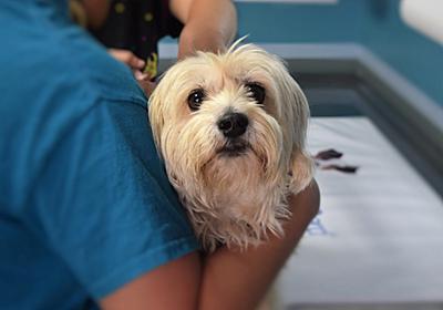 特定の動物病院に富が集中する可能性は? ~犬猫の飼い主が見た、加計学園問題(その4)~ - 犬を飼うということ