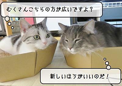 猫の道具 ~ダンボール猫なべ追加~ - 猫と雀と熱帯魚