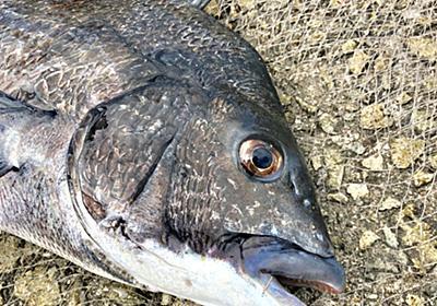 本当は教えたくない紀州釣り団子の「固さ」と「バラけ」を調節するワザ | 淡路島を愛する紀州釣り師〜茅渟富団子屋〜