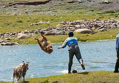 カザフ人はヒツジの毛を狩る前に羊を丸洗いします。→予想外の豪快さに衝撃 - Togetter