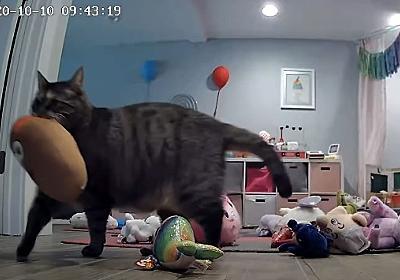 毎晩ベッドルームのドアの前に貢物を持ってくる猫。それがどんどんエスカレートして... : カラパイア