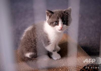 中国企業、飼い猫のクローン化に初成功 次はパンダ? 写真10枚 国際ニュース:AFPBB News