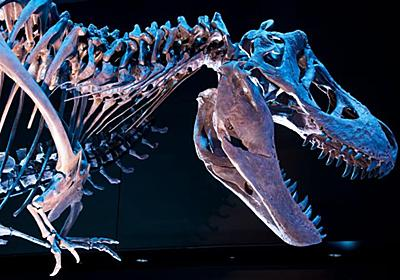 ティラノサウルスから走って逃げることは可能   ナショナルジオグラフィック日本版サイト