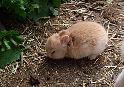 かわいすぎるウサギのアカチャンが生まれたので名付けて見守っていたら、ある日衝撃の事実が判明「コムギチャン…増えてる…???」