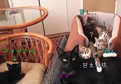 これは天国…家に帰ると子猫たちがぎっしり固まって寝てた(動画):らばQ