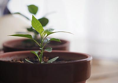 ベランダ園芸計画.2017 が早くもパンクしそうだ | 私的植物生活概論
