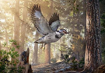 恐竜時代の奇妙な鳥の新種化石を発見、謎深まる   ナショナルジオグラフィック日本版サイト