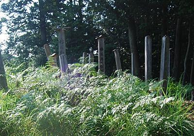奈良に「土葬の村」発見! なぜ、今も、村人は土葬を選ぶのか?(高橋 繁行)   現代新書   講談社(1/3)