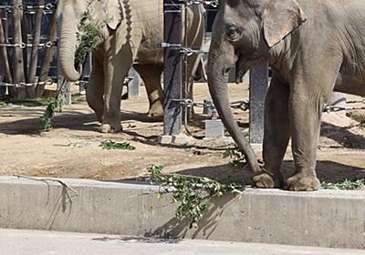 動物園の餌、寄付してほしいゾウ 財政難の京都市、街路樹の枝葉や野菜くずで節約中|社会|地域のニュース|京都新聞