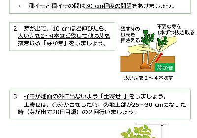 ジャガイモは光に当てないで―― 農水省が栽培や調理時の取り扱いについて注意喚起 - ねとらぼ