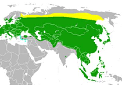 スズメ - Wikipedia