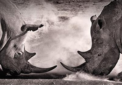 同種間で殺しあう動物たち。なぜ彼らは殺しあうのか? : カラパイア