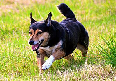 犬は特に他の動物と比較して賢いというわけではない - GIGAZINE