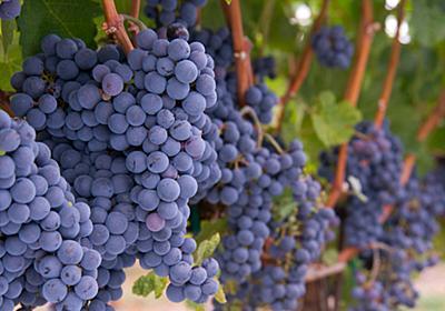 日本人夫婦のワイン醸造家が世界的に高い評価を受けるもフランスからの国外退去を迫られる - GIGAZINE