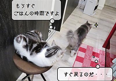 猫雑記 ~開拓者むくの挑戦~ - 猫と雀と熱帯魚