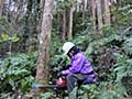 暗躍する森林ブローカー 買いたたきが阻む成長  :日本経済新聞