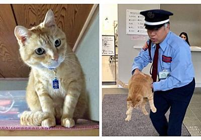 猫と警備員の攻防、「ゴッちゃん」引退 旧友が去って警備員の思いは - withnews(ウィズニュース)
