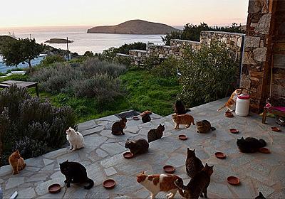 55匹の猫のお世話をするお仕事です。エーゲ海に浮かぶ美しい島の猫たちのお世話係を募集中(ギリシャ) : カラパイア