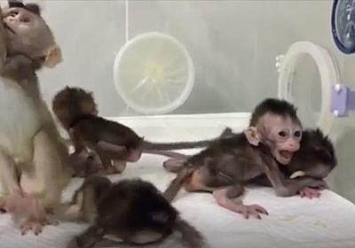 中国のクローン猿作出がいろんな意味でアウト | ギズモード・ジャパン