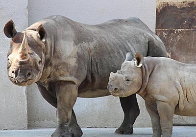 似て非なる日本と欧米の動物園──野生生物保全と動物福祉の視点から|特集|三田評論ONLINE