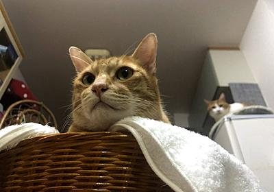 人間のストレッチは猫の目にはどう映っているのか? - にゃにゃにゃ工務店