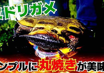ミドリガメは「コンロで丸焼き」にするだけで十分美味しい   野食ハンマープライス