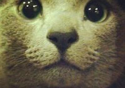 """Sonota on Twitter: """"そういえば、産経新聞が2月に出したこの5000円の領収書って何だったんだ。 ANAホテル領収書 桜夕食会の宛名は「上様」 首相答弁と一致 https://t.co/sAGmhoid5j @Sankei_newsより"""""""