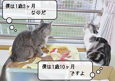 猫雑記 ~2019年8月の猫様体重測定~ - 猫と雀と熱帯魚