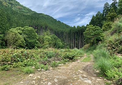 ソロキャンパー向け山林レンタルサービス「YAMAKAS(ヤマカス)」で、2021年6月10日から大分県初の山林レンタルを開始 | メディコム株式会社のプレスリリース
