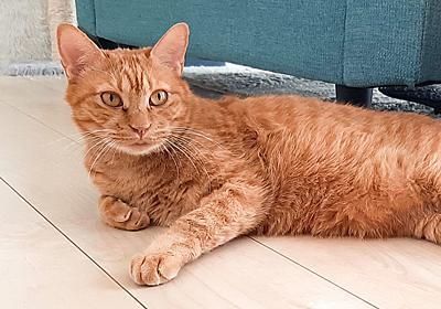 アマゾン ウェブ サービスに猫のごはんを相談したら、ハードウェアもクラウドもぜんぶ提案してくれた | ギズモード・ジャパン
