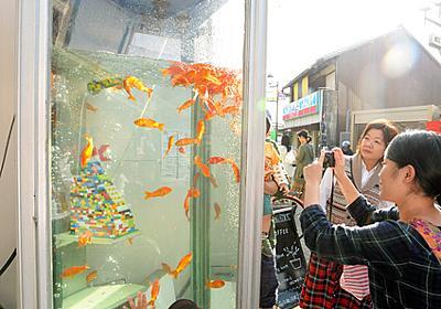 金魚電話ボックス、著作権侵害の訴え棄却 作家は控訴へ:朝日新聞デジタル