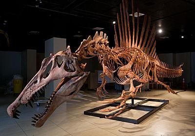 """最凶の""""半水生""""魚食恐竜、実は泳ぎがヘタだった   ナショナルジオグラフィック日本版サイト"""