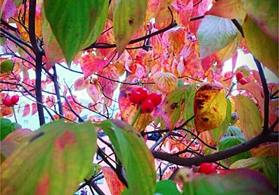 麗らかな秋の日、元うら若き男、浦和にて - 眠れない夜の為に-チープな 午後3時-