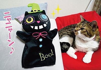 猫とパペット | うにオフィシャルブログ「うにの秘密基地」Powered by Ameba