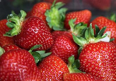 CNN.co.jp : オーストラリア全土でイチゴに針混入 輸出にも影響、消費の呼びかけも
