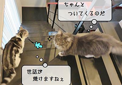 猫雑記 ~猫様達のマネージメント業務~ - 猫と雀と熱帯魚