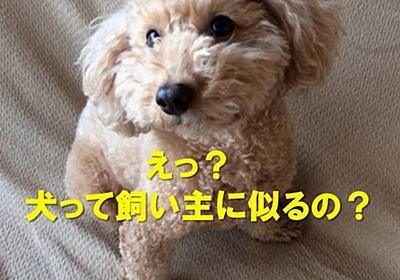 犬は飼い主に似るとよく言われますが・・・ - NANA`S  ROOM