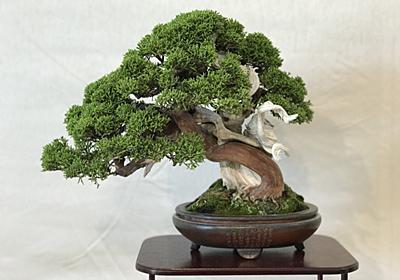 好きが高じて「盆栽」修行の道へ 手間こそ楽しむ、贅沢な趣味の世界 - マネ会