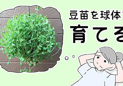 豆苗を球体で育てる :: デイリーポータルZ