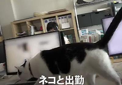 保護猫が社員とともに出勤する「猫手当」なる制度を取り入れている会社がある「素敵すぎる会社」「転職したい」 - Togetter