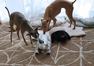 「お尻をクンクン」――本物の犬が「aibo」のおしりを嗅ぐ理由 - ITmedia NEWS
