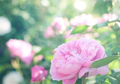 英語で名言を:あなたのすきな花おしえて わたしもすきになりたいから(矢野顕子) - tsuputon's blog