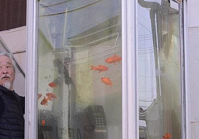 金魚電話ボックス訴訟 「著作権法上の保護対象ではない」と現代美術作家の訴え退ける 奈良地裁 - 毎日新聞