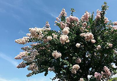 よく見かける「夏の花」の名前6選。散歩や通勤で花を愛でよう【関東近郊】|じゃらんニュース