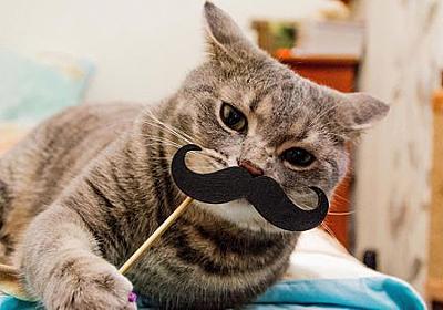 ネコは人間の行動をまねできると判明 - GIGAZINE