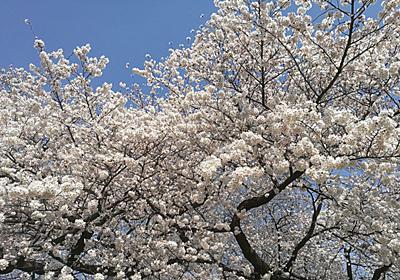 """""""桜ソング""""の栄枯盛衰 ~2000年代の爆発的なブームはなぜ起こったのか~ - 音楽ナタリー"""
