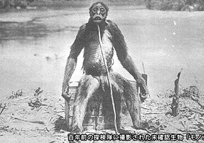 NHK『大アマゾン緑の魔境に幻の巨大ザルを追う』に登場したサルたちを解説する - おまきざるの自由研究