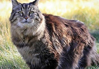 114歳のインコ、507歳のはまぐり、ネット上で話題となった10の長生き動物 : カラパイア